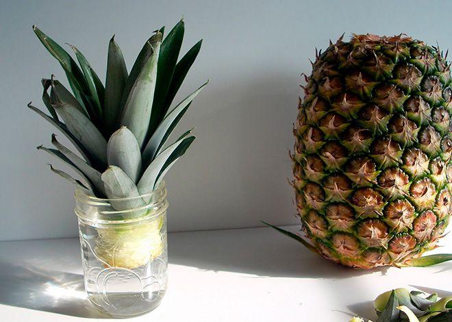 Проращивают ананас