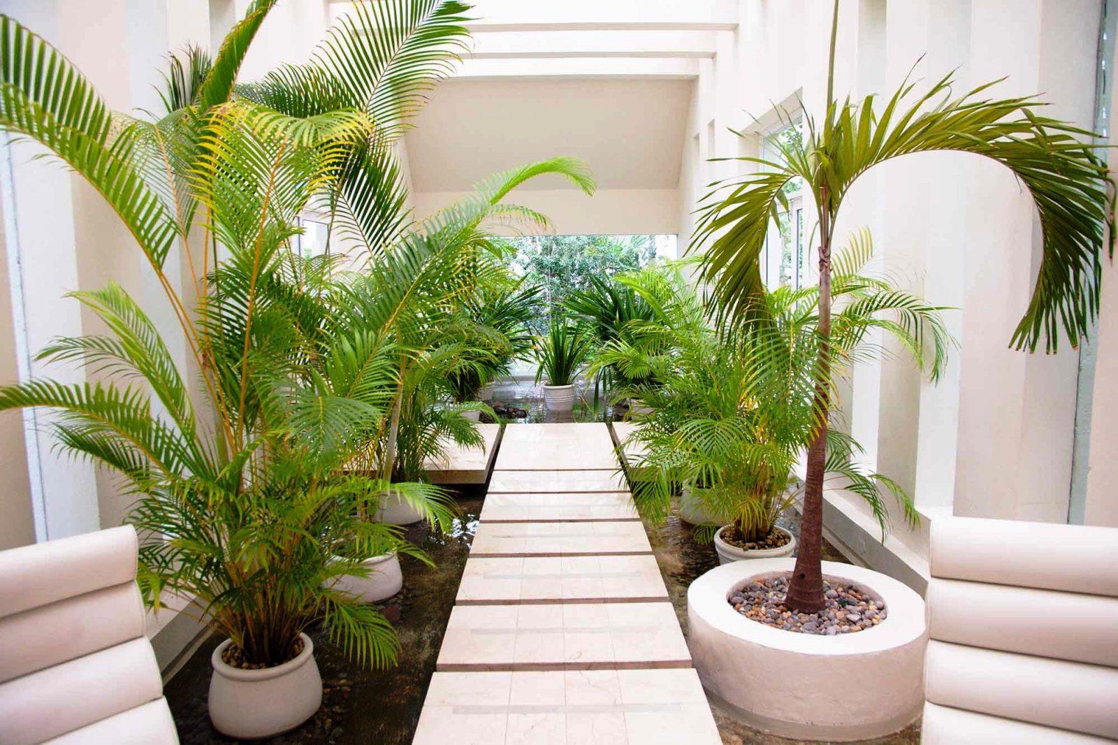 комнатные пальмы фото