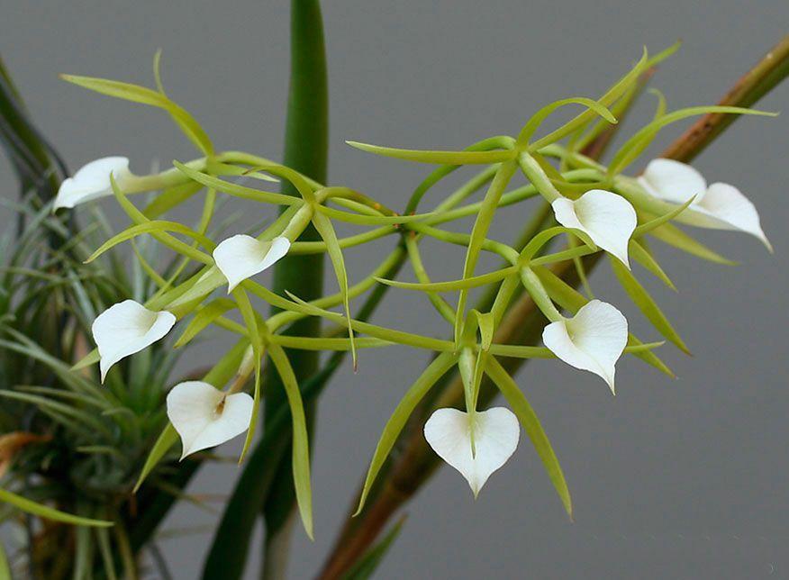 Особенности выращивания манго из косточки